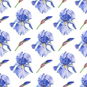 Niebieski. fioletowe irysy. kwiaty w akwarela na białym tle.