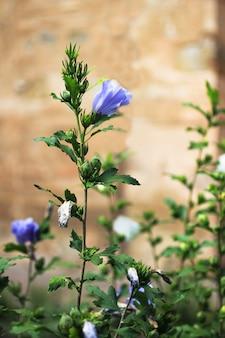 Niebieski kwiat na długiej zielonej łodydze.