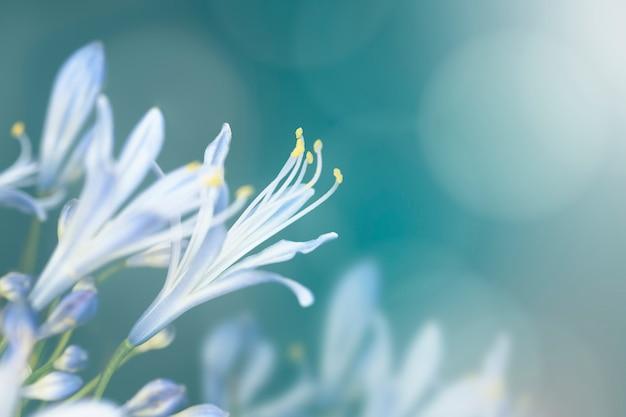 Niebieski kwiat na wolności