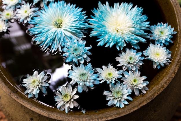 Niebieski kwiat w misce