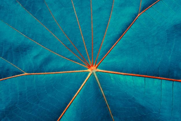Niebieski liść z czerwoną linią streszczenie tekstura tło