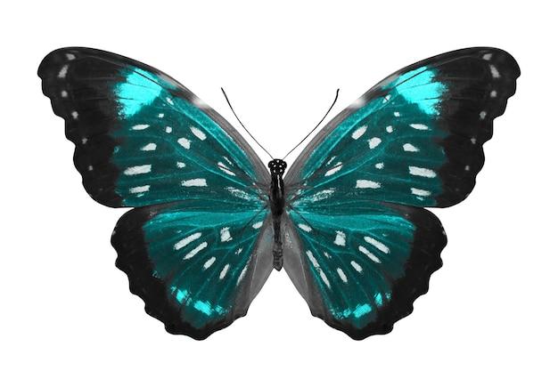 Niebieski motyl. naturalny owad. na białym tle