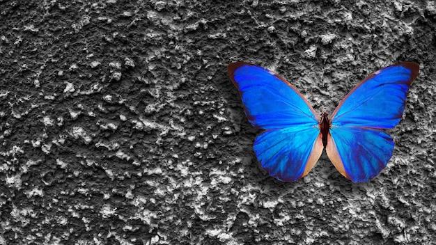 Niebieski motyl siedzi na szarej starej ścianie