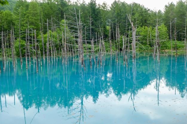Niebieski staw w hokkaido, japonia