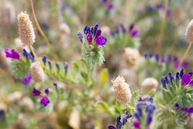 Niebieskie i bordowe kwiaty w tle