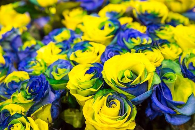 Niebieskie i żółte róże w bukiecie z bliska