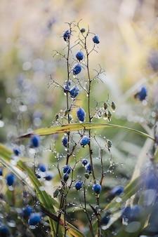 Niebieskie jagody na brązowej łodydze