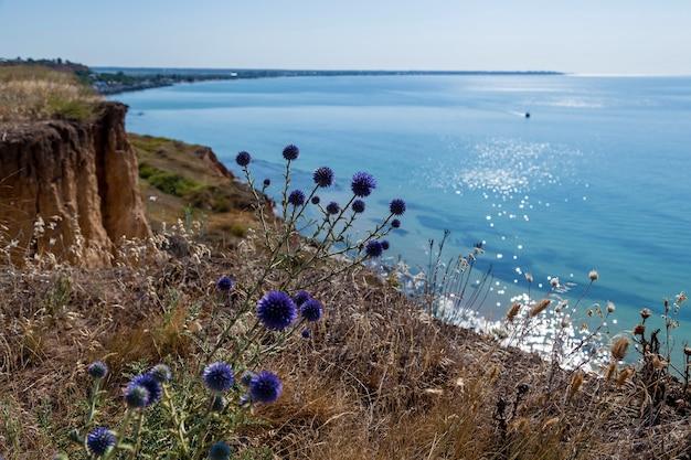 Niebieskie kolce na tle turkusowego morza. błękitne niebo i turkusowa woda.