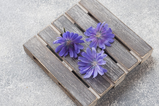 Niebieskie kwiaty cykorii na szarym stole. ścieśniać.