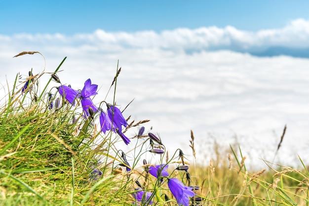 Niebieskie kwiaty dzwonki z zieloną trawą nad białymi chmurami