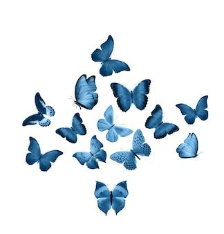 Niebieskie motyle na białym tle. ćmy tropikalne