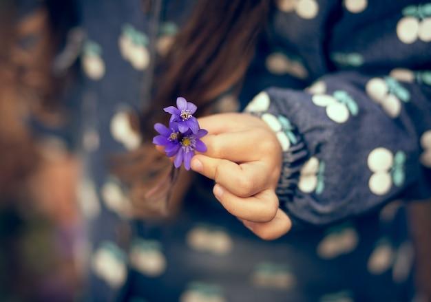 Niebieskie przebiśniegi w rękach dzieci