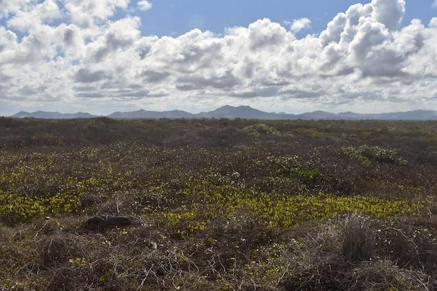 Niebieskie sylwetki gór w polu