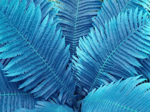 Niebieskie tło abstrakcyjne z liśćmi paproci