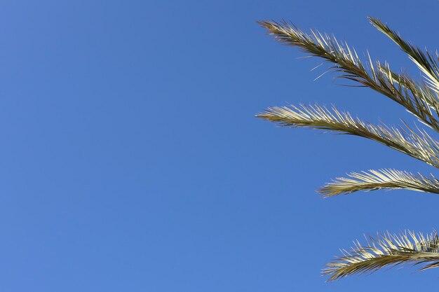 Niebieskie tło na białym tle z gałęzi palmowych w tropikach