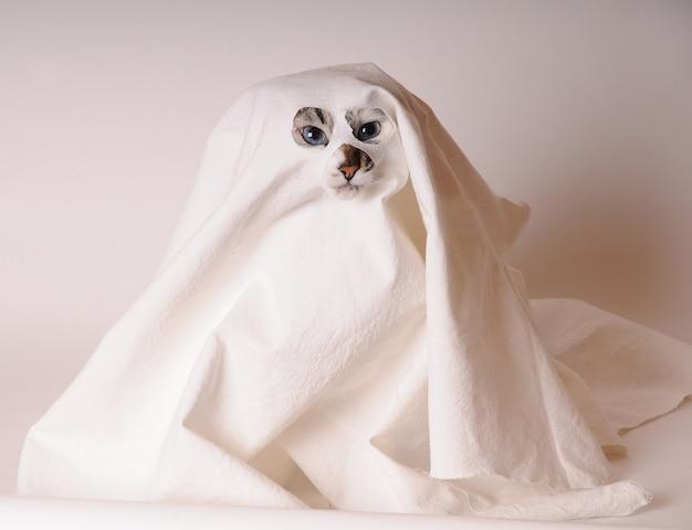 Niebieskooki biały kot przebrany za ducha w prześcieradło z rozcięciami na oczy i nos na białym tle jasne tło