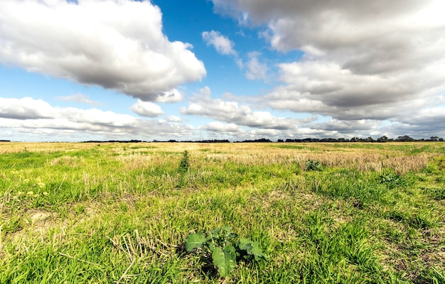 Niebo chmury i trawa w polu, skoszona trawa