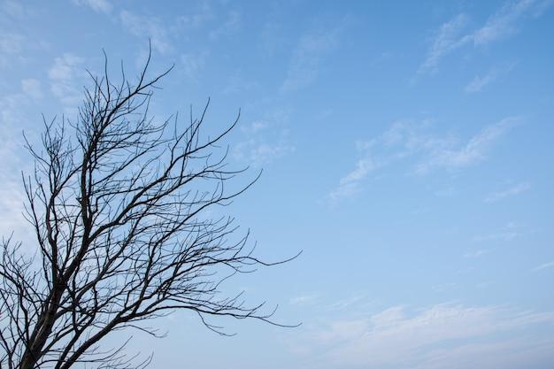 Niebo i martwe drzewa