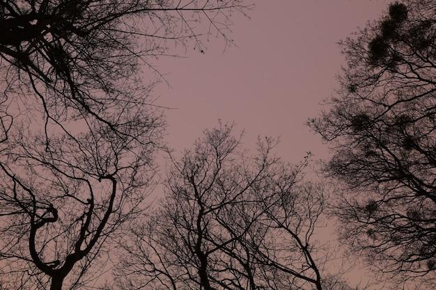 Niebo w nocnym zimowym lesie