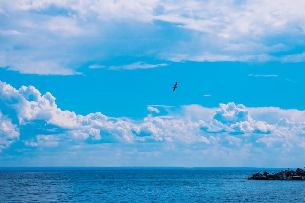 Niebo z grubymi chmurami nad błękitnym morzem, mewa latająca na niebie