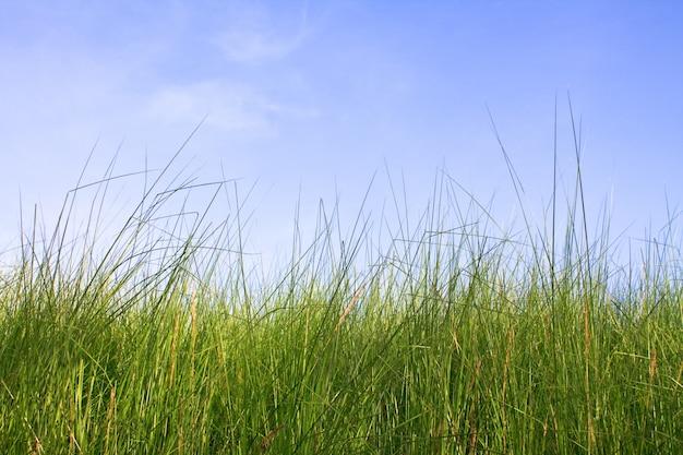 Niebu holandia krajobraz idylliczny wydma
