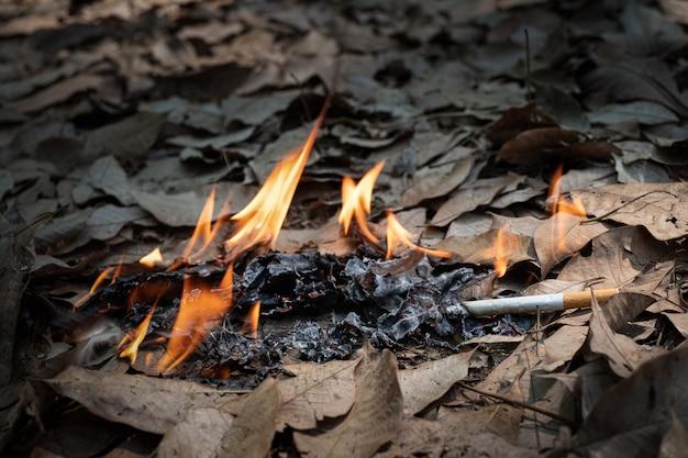 Niedopałki papierosów nieuważnie wyrzucone w suchą trawę na ziemi