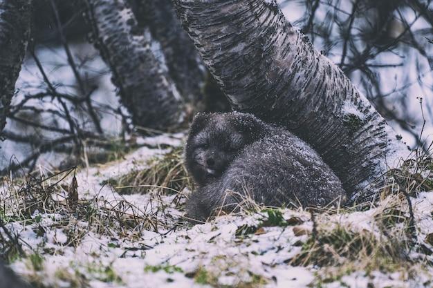 Niedźwiedź czarny na zielonej trawie w ciągu dnia