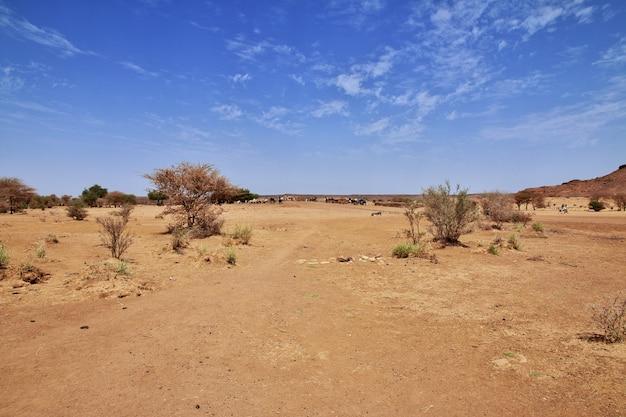 Niektórzy ludzie na saharze w sudanie, nubia