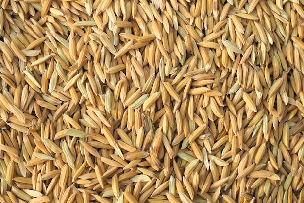 Niełuskany ryż natura tekstura tło. jedzenie natury