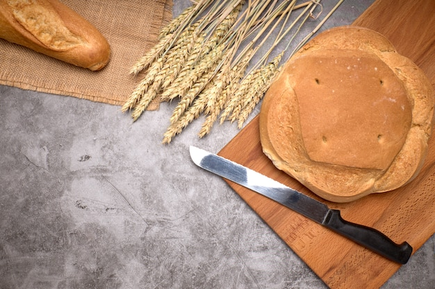 Nieociosani chleba i pszenicy kolce na szarym tle