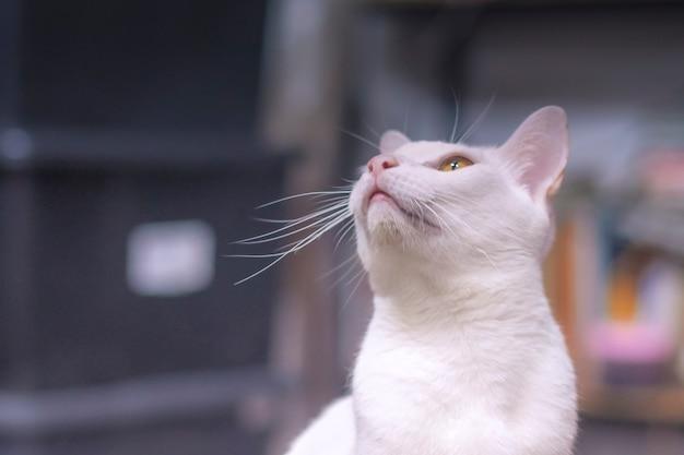 Nieostrość białego kota patrzącego w górę