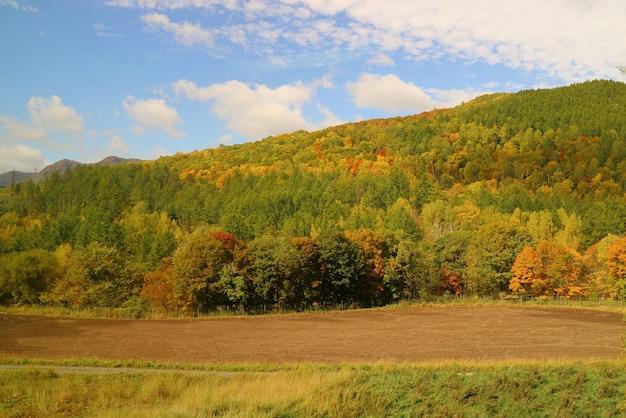 Nieostrość jesiennego widoku z kolorowym urlopem na drzewie i błękitnym niebem jesienią. widok z okna uruchomionego samochodu.