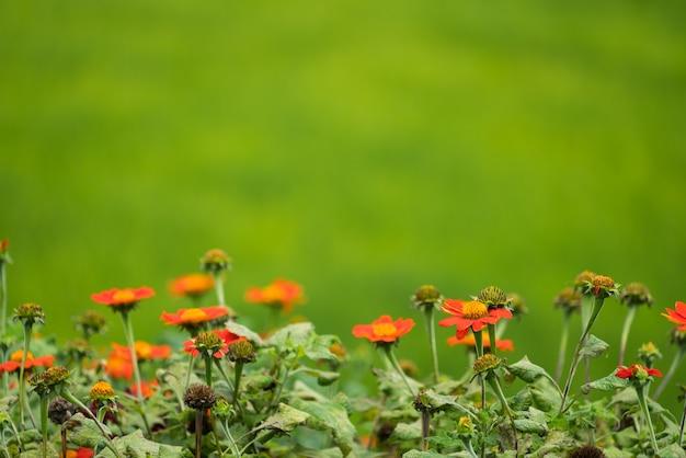 Nieostrość obrazu kwiatów na zielonym tle