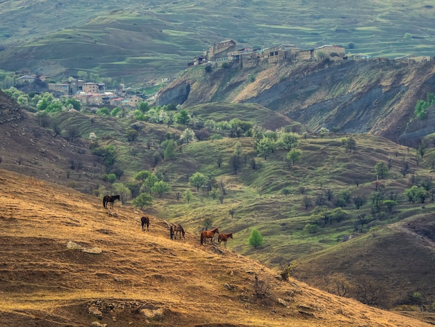 Nieostrość. stado koni pasie się na zboczu góry. letni poranek wiejski krajobraz. dagestan.