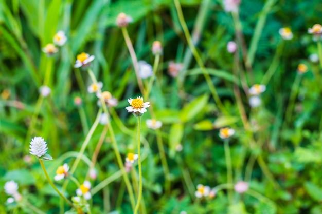 Nieostrość, vintage kwiat trawy