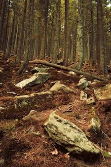 Nieprzejezdny gąszcz w gęstym lesie na wzgórzu