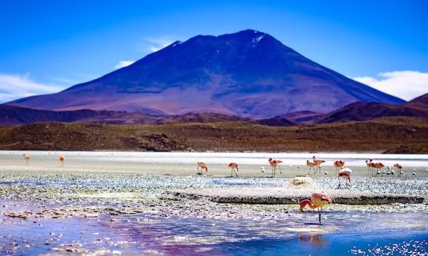 Niesamowita sceneria czerwonej laguny colorada ze stadem pięknych flamingów w górskiej boliwii