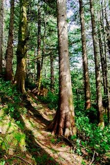 Niesamowita sceneria pięknego lasu