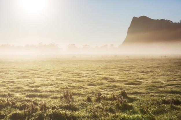 Niesamowite mgliste krajobrazy wiejskie o poranku. nowa zelandia piękna przyroda