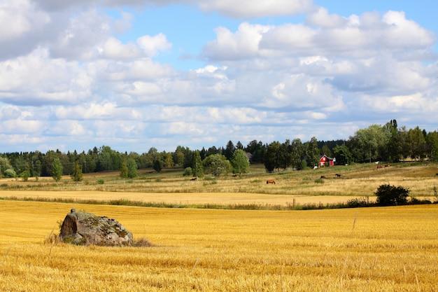 Niesamowite pole i farma