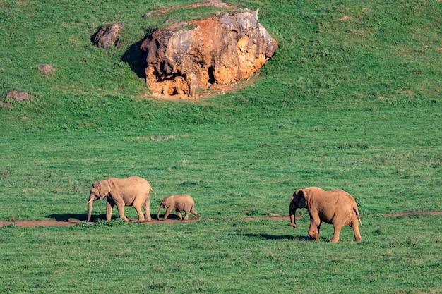 Niesamowite słonie na łące