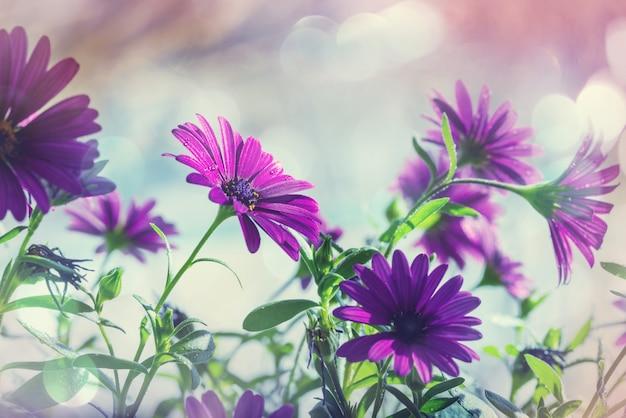 Niesamowite świeże kwiaty w letnim ogrodzie