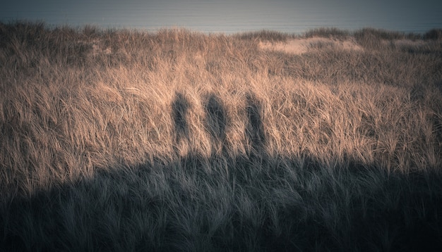 Niesamowite ujęcie sylwetki trzech osób na wybrzeżu