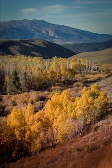 Niesamowite ujęcie żółtolistnych drzew na zboczu wzgórza