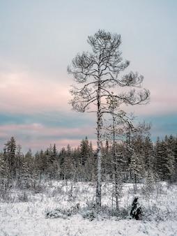Niesamowity arktyczny krajobraz z drzewem na śniegu w dzień polarny.