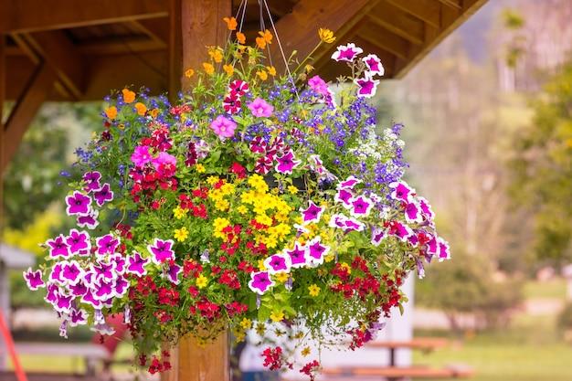Niesamowity kolorowy kwiat w wiosennym ogrodzie