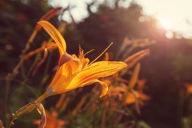 Niesamowity kolorowy kwiat