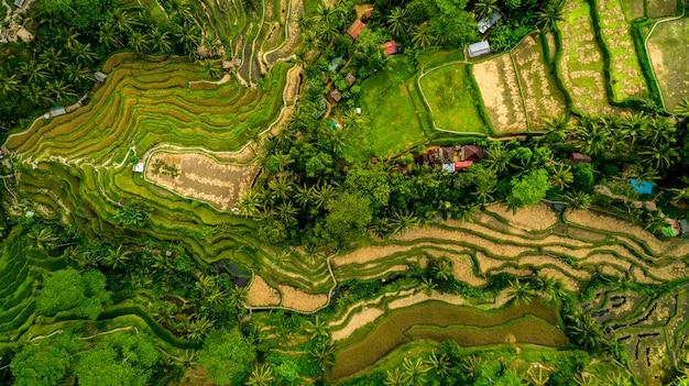 Niesamowity krajobraz nad tarasami ryżowymi z lotu ptaka