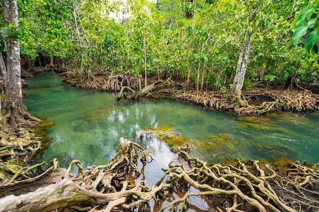 Niesamowity krystalicznie czysty szmaragdowy kanał z lasem namorzynowym w thapom krabi w tajlandii