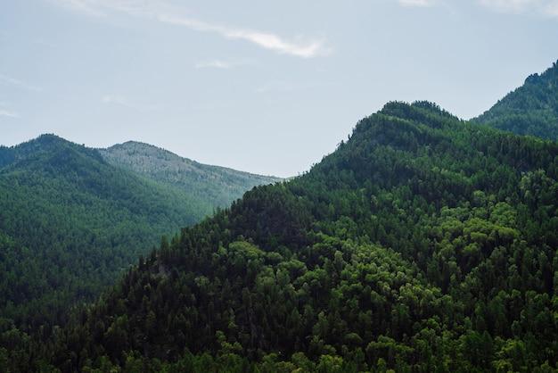 Niesamowity malowniczy widok na zielone góry całkowicie pokryte lasem pod czystym, błękitnym niebem